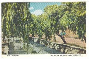 The Willow Of Nishibori, Niigata, Japan, 1900-1910s