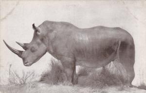 White Rhinoceros , 00-10s