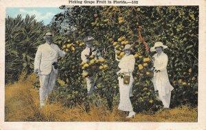 Picking Grapefuit in Florida, early postcard, unused