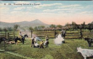 Cows Cowboys Branding Calves In A Corral 1918
