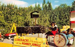 MIAMI FLORIDA~LIBERACHI OF THE MONKEY WORLD~MONKEY JUNGLE BAND~POSTCARD 1959