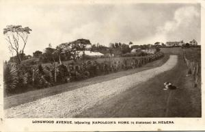 saint helena, LONGWOOD, Longwood Avenue showing Napoleon's Home (1930s) RPPC