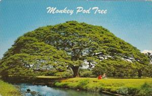 Hawaii Hawaiian Monkey Pod Tree
