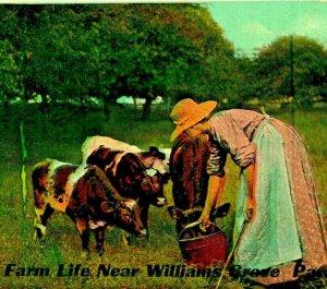 Granja Vida Feeding Vacas Circunferencias Casi Willamsburg Pennsylvania Pa Unp