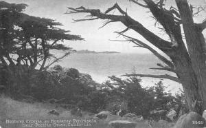 Pacific Grove California Monterey Cypress Peninsula Antique Postcard K80407