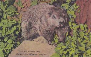 Mr Groundhog The Original Weather Prophet