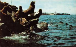 Vintage Postcard Sea Lions, Monterey Peninsula, California, USA #407