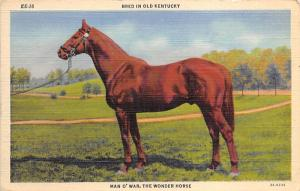 Man O'War the Wonder Horse, Horse Racing, Trotters, Postcard Unused