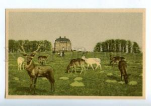 155908 DENMARK COPENHAGEN Deer-park Vintage postcard