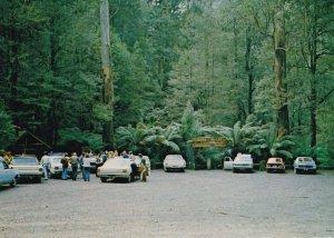 Tarra Valley National Park Car Parking Entrance South Gippsland Australia Pos...