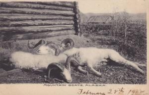 Mountain Goats , Alaska , 00-10s