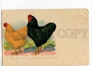 264849 Wyandotte chicken BREED Hens COCK Vintage Sturtz #53 PC