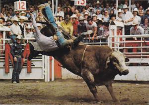 Brahma Bull Riding, Calgary Exhibition and Stampede, CALGARY, Alberta, Canada...