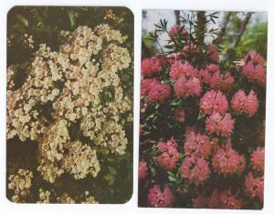 Flowers Rhododendron Mountain Laurel (2 Cards)