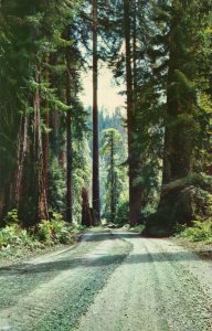 10091 California Redwoods
