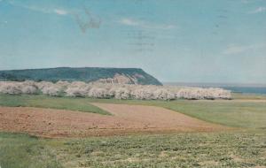 Cape Blomidon , Nova Scotia ,  Canada , PU_1968