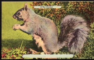 North Carolina A Nut Cracker Squirrel - LINEN