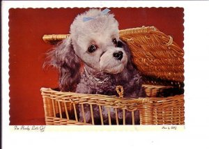 Poodle Puppy in Basket. I'm Ready, Let's Go