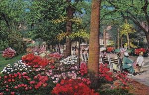 Georgia Savannah Forsythe Park