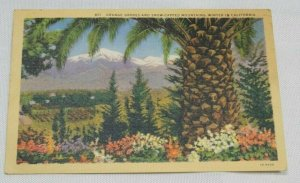1930 Vintage Postcard Orange Groves and Snow Capped Mountains