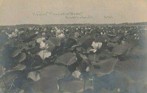 RP: GRASS LAKE, Illinois, PU-1911; Lotus Beds ; C.R. CHILDS