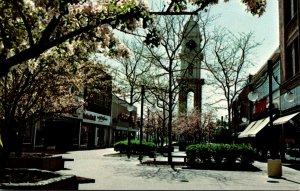 Iowa Dubuque Hawthorne Tree Blossoms In Town Clock Plaza