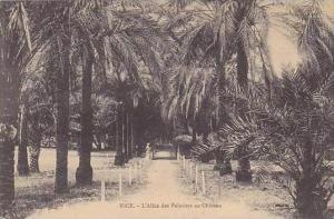 France Nice L'Allee des Palmiers au Chateau 1911
