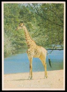 Nasionale Krugerwildtuin
