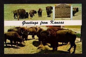 KS Greeting Buffalo Bison Fort HAYS KANSAS Postcard PC