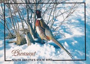 South Dakota State Bird Ring-Necked Pheasant 1991