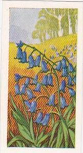 Glengettie Trade Card Wild Flowers No 5 Bluebell