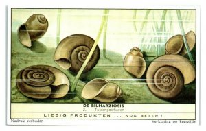 Snails become Hosts Schistosomiasis Bilharziosis Liebig Belgian Trade Card