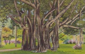 Florida Saint Petersburg The Banyan Tree