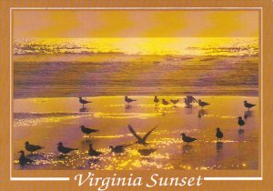 Sunset Greetings From Virginia's Eastern Shore