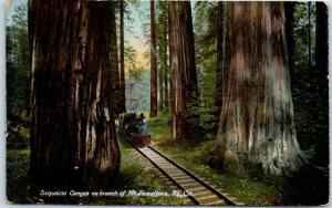 Mt. Tamalpais Railroad California Postcard Sequoia Canyon w/ Train 1908 Cancel