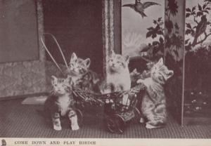 Kittens Come Down & Play Wanting To Eat Birdie Real Photo Old Comic Cat Postcard