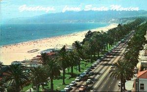 California Santa Monica Greetings Showing Palm Lined Palisades Park 1980