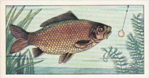 Badshah Tea Trade Card Fish &  Bait No 2 Common Carp