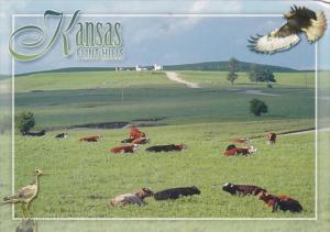 Kansas Flint Hills Dairy Farm Scene
