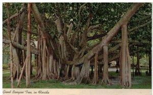 Postcard - Giant Banyan Tree In Tropical Florida
