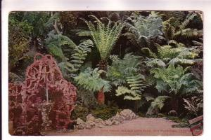 Tree Ferns Golden Gate Park San Fransico, California, Edward Mitchell Pan Pac...