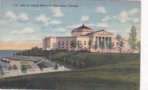 Illinois Chicago John G Schedd Memorial Aquarium 1950 Curteich