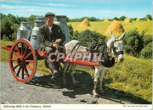 Postcard Modern Belivering milk to the Creamery Donkey Mule