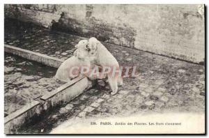 Old Postcard Bear Paris Jardin des Plantes Bears s & # 39amusent