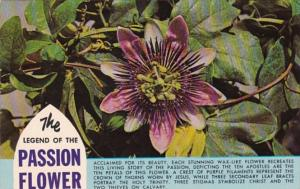 The Legend Of The Passion Flower
