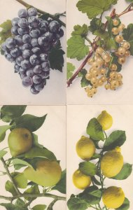 Lemons Pears Grapes 4x Antique Fruit German 1906 Education Committee Postcard s