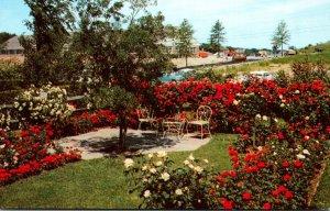 New York Newark Jackson & Perkins Rose Gardens One Of The Small Gardens