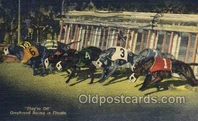 Greyhounds, FL USA Dog Racing, 1956 light postal marking on front, postal use...