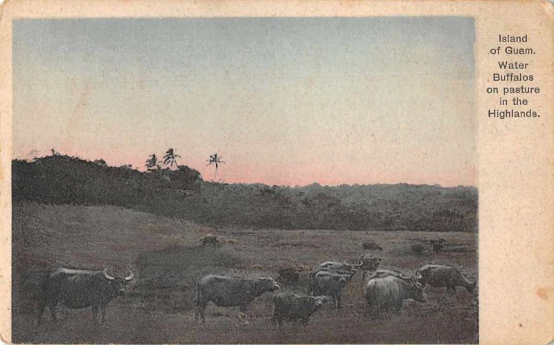 Guam Highlands Water Buffalo Scenic View Vintage Postcard JI658466