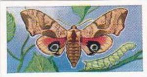 Swettenhams Tea Vintage Trade Card Butterflies & Moths 1958 No 23 Eyed Hawk Moth